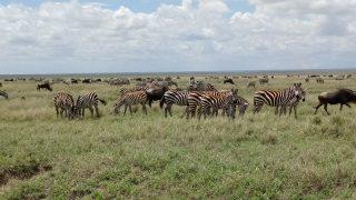 アフリカの問題点とタンザニア